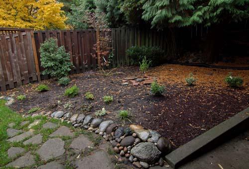 backyard after planting